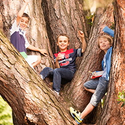 Three student on a tree at SIS Swiss International School
